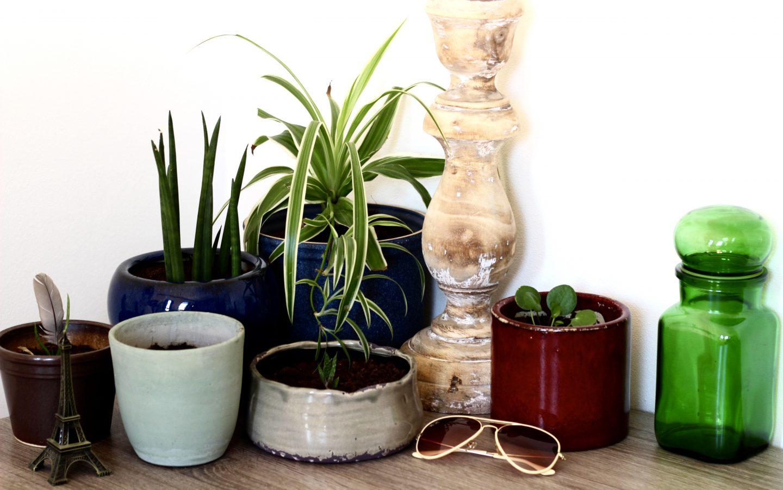 Sytse fotografeert #3 | Mijn planten