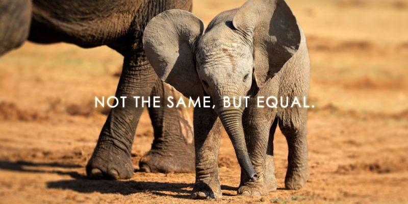 unity equal