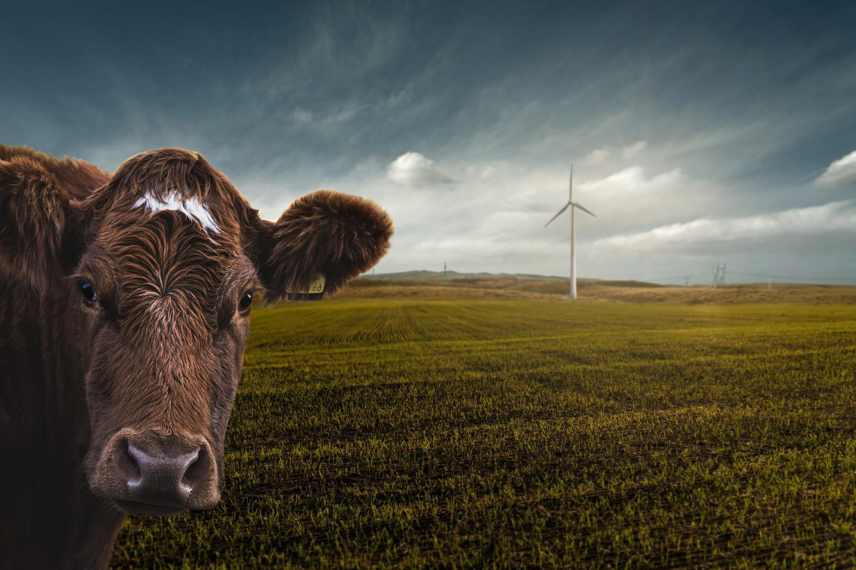 veganist milieu