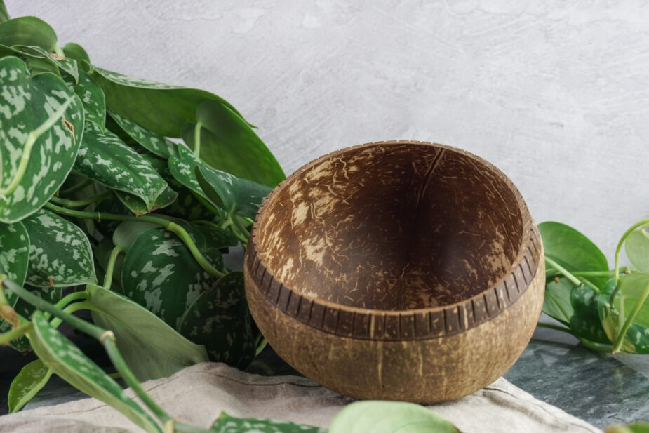 Plantahead coconut bowl zustainabox