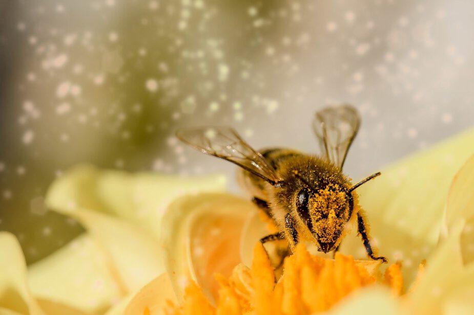 Waarom eten vegans geen honing?